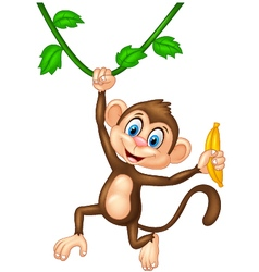 Cartoon monkey holding banana fruit vector