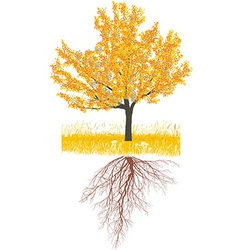 Cherry tree in autumn with roots vector image