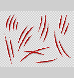 claws scratches animal claw tracks cat or tiger vector image