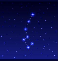 constellation ursa minor vector image