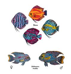 Great aquarium fishes set vector