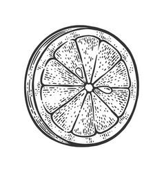 Lemon slice sketch vector