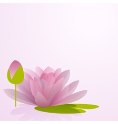 Pink waterlily flower with reflection in water vector