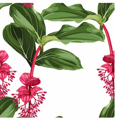 Seamless pattern with tropical medinilla flowers vector