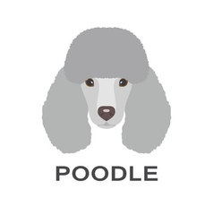 poodle in flat style Poodle flat icon vector image