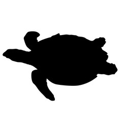 silhouette beautiful sea turtle on a white vector image vector image