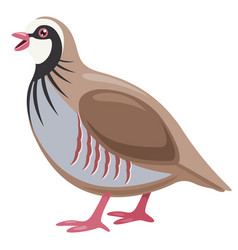 cartoon partridge vector image