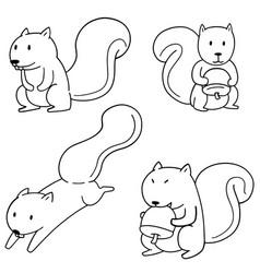 set of squirrel vector image