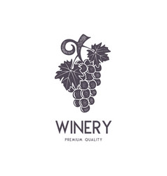 wine winery logo template drink alcoholic vector image vector image