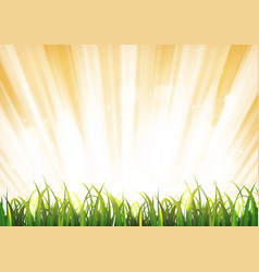 summer sunshine background with grass leaves vector image vector image