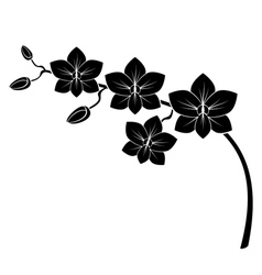 Orchid branch vector