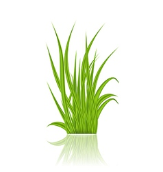 Summer green grass with reflection vector image vector image