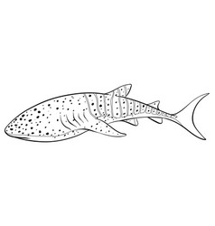 Animal outline for whale vector