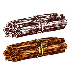 cinnamon sticks isolated on transparent background vector image
