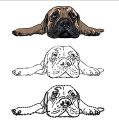 Drawing of lying bullmastiff vector image