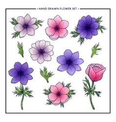 Floral set of anemones vector