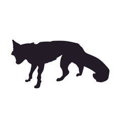 fox stands silhouette vector image