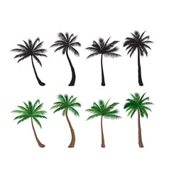 palm tree set nature floral design elements vector image