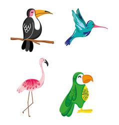 set of summer exotics birds vector image
