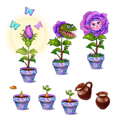 Stages growth magical flower with human face vector