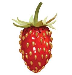 Strawberry wild vector