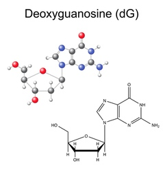 Structural chemical model of deoxyguanosine vector image