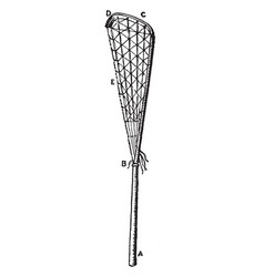 The crosse lacrosse vintage vector