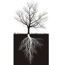 Cherry tree without leaves with roots vector image