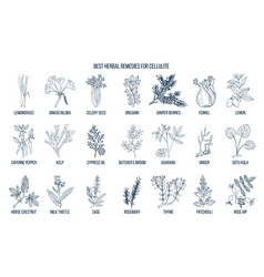 collection of best herbs for cellulite vector image