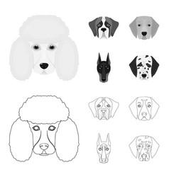 muzzle of different breeds of dogsdog of the vector image
