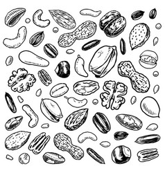 nuts mix background seeds and granule corn vector image