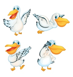 Set of Pelicans vector