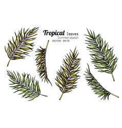 Set palm leaf drawing with line art on white vector