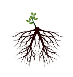 Shape of small tree and big roots vector