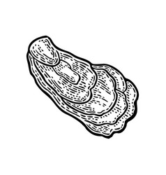 Oyster isolated on white background vintage black vector