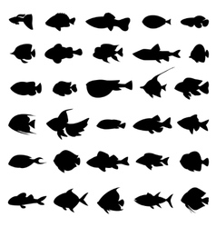 Fish silhouettes black on white vector image