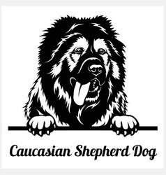 Caucasian shepherd dog - peeking dogs - breed face vector