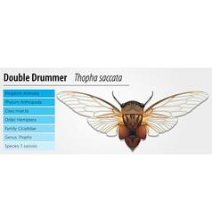 Double drummer vector