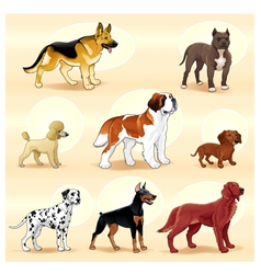 groups dog vector image