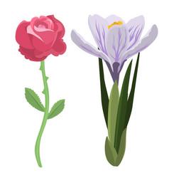 beautiful spring flower botanical bloom watercolor vector image vector image