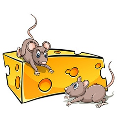 Slice of cheese with rats vector