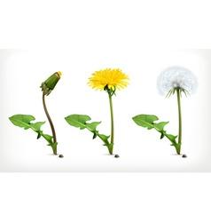 Dandelion flowers icon set vector