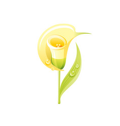 calla lily flower floral icon realistic cartoon vector image