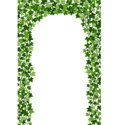 Ivy creeper arch isolated on white background vector