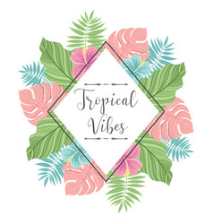 tropical label with palm leaves perfect for vector image