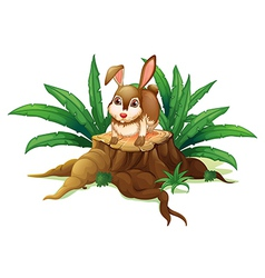 A rabbit above the wood vector image