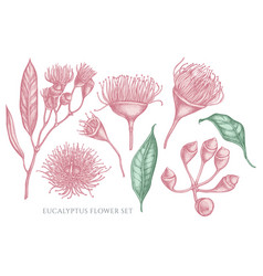 collection of hand drawn pastel eucalyptus vector image