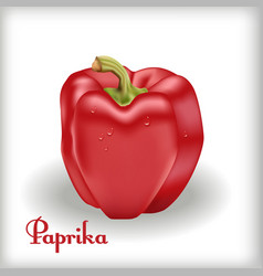 Red bulgarian pepper vector