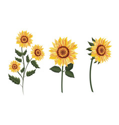 Set exotic sunflowers plants with leaves vector