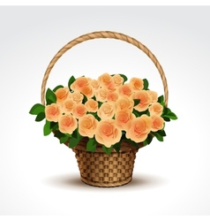 basket yellow roses isolated vector image